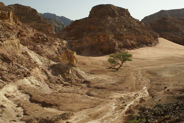 Egyptian Sinai scene